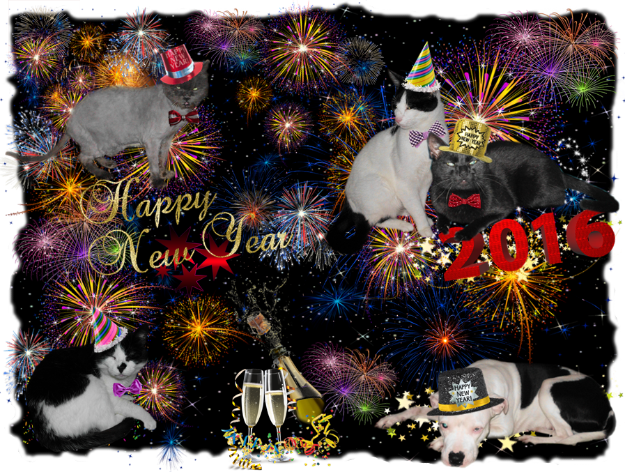 http://for-the-voiceless.com/attachments/Image/New-Year-my-Sweeties.png?template=generic